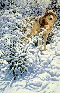 Winter Spirit - Gray Wolf