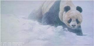 Wolong Whiteout - Panda