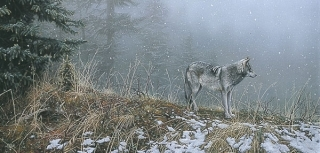 Silent Snows