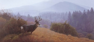 Autumn Haze - Mule Deer