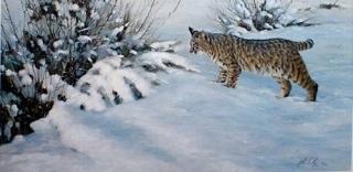 Something Moved -Bobcat