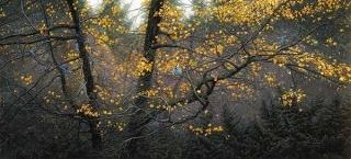 Steller Autumn