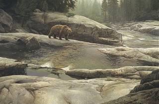 Uzumati Great Bear of Yosemite