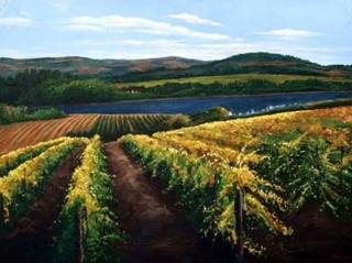 Vineyard Calm