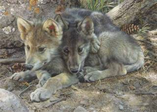 Brotherly Love - Wolf Pups