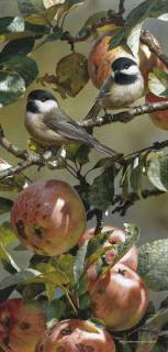 Chickadee and Apple Tree