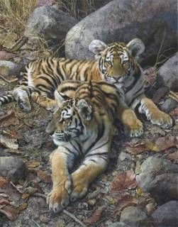 Endangered Ambassadors - Tiger Cubs