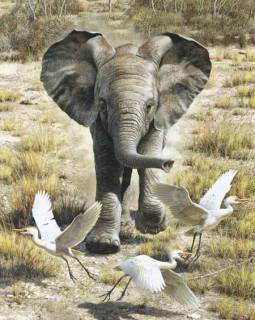 Flushing Egrets - Baby Elephant
