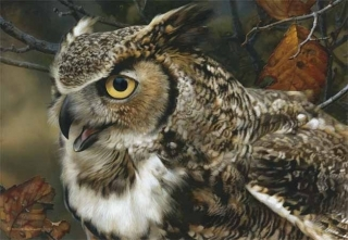 In Focus - Great Horned  Owl