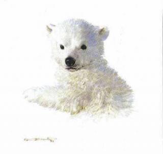 Polar Bear Cub  Study