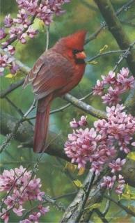 Spark of Ruby - Cardinal