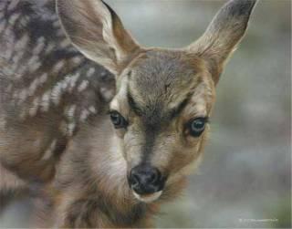 Spotted - Mule Deer