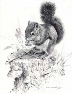 Squirrel Dish - Pencil