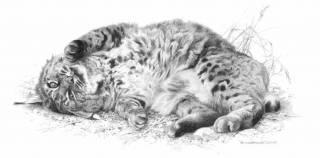 Wild Thing - Bobcat