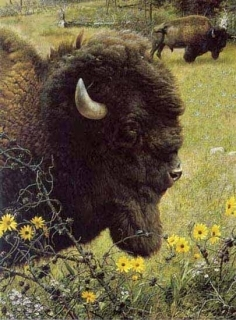 Witness of  the  Past - Bison