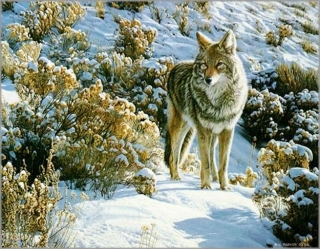 Winter Sage - Coyote